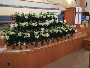 Easter Lilies in Church